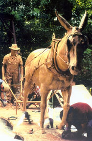 mule and farmer preparation